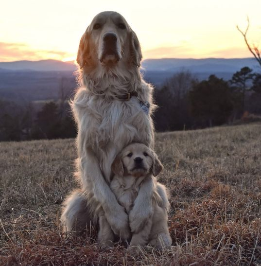 dog with her pup