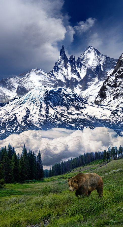 bear walking through mountains