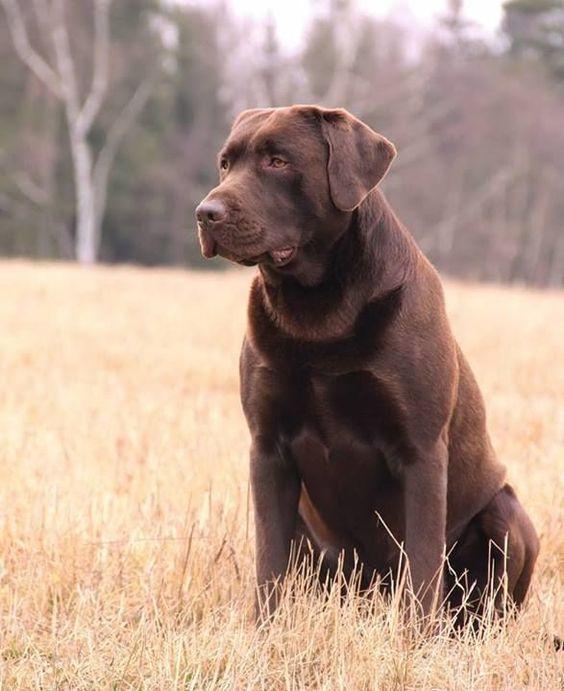 handsome dog