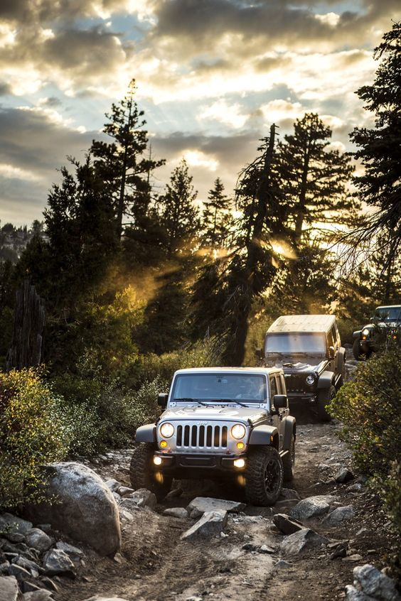 jeeps out in the wild