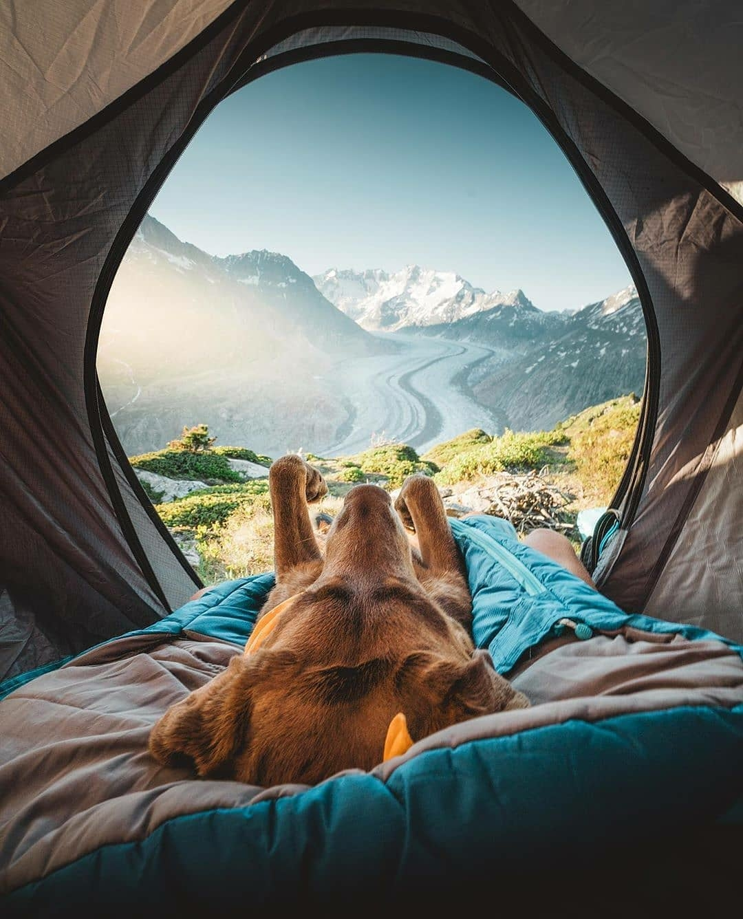 doggo relaxing in tent with view