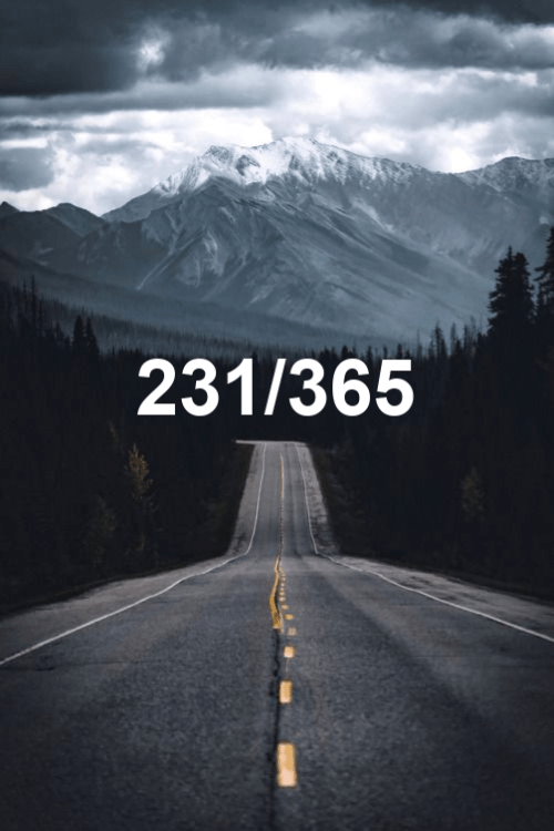 today is day 231 of the year 2019