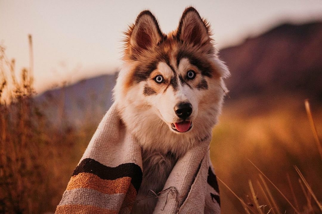 cute dog with blanket outdoors