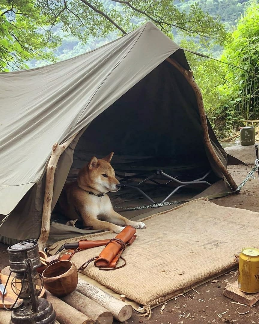 dog in tent