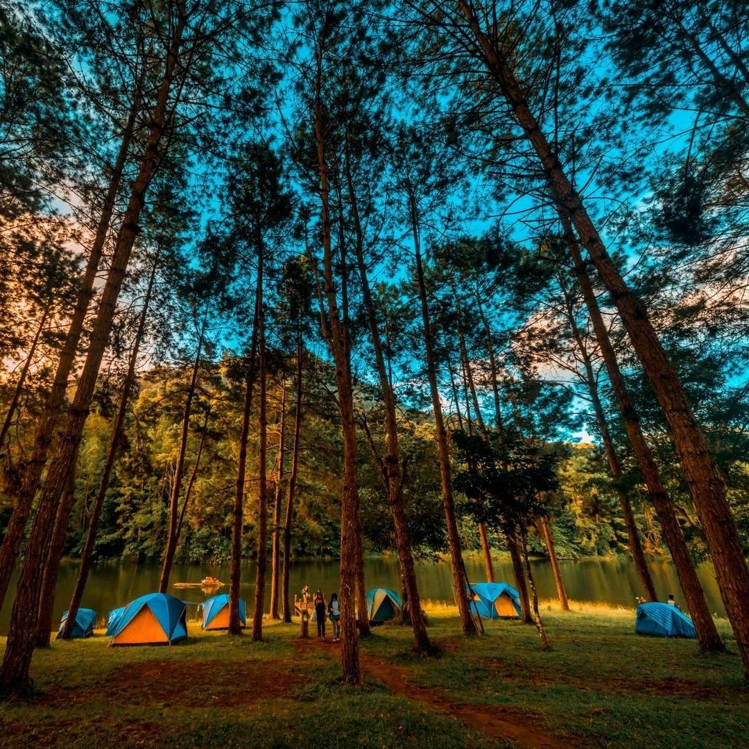 camping tents among trees near lake