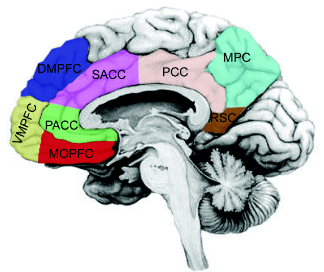 Cortical_midline_structures
