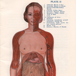 Sexology Circa 1942: Vintage Anatomical Charts of the Male and Female Body, as Animated GIFs