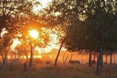 Animals returning home at dusk (Lion Camp)