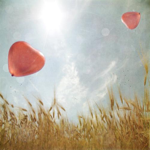 balloonsfieldheartbokehheartslight-b47c8c174dc05d52a9daf1b2bbed76c3_h
