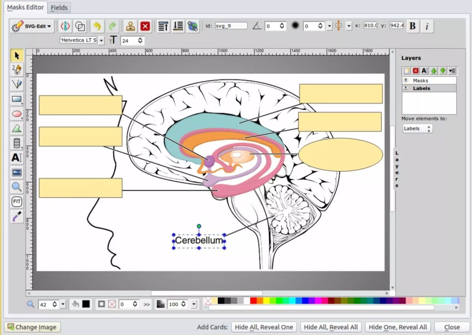 3 Ways To Better Study For Anatomy In Medical School Themdjourney