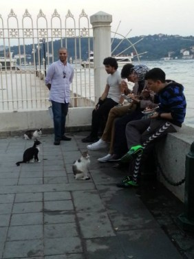 A bunch of street cats await feeding from evening diners at Karatos.
