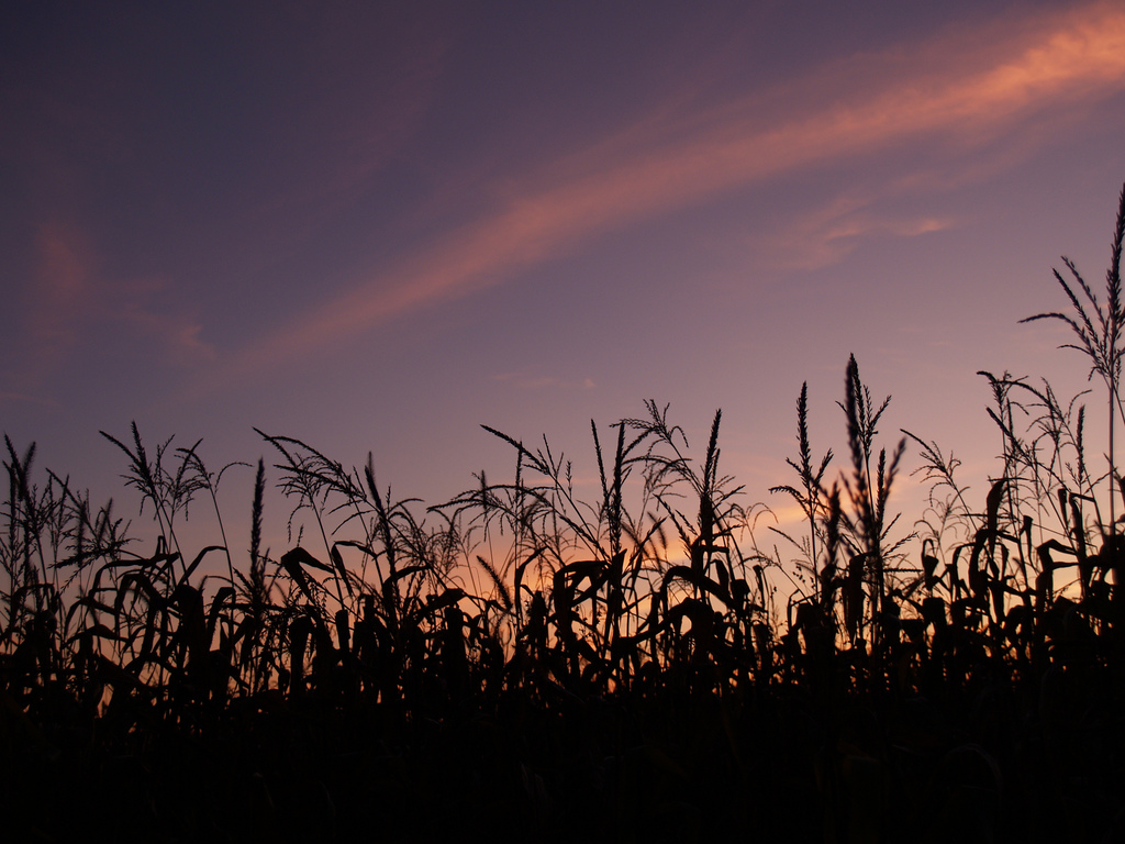 """The Cornfield and the Tunnel"" A Short Story by Roy Dorman. Read online at www.ThemeOfAbsence.com"