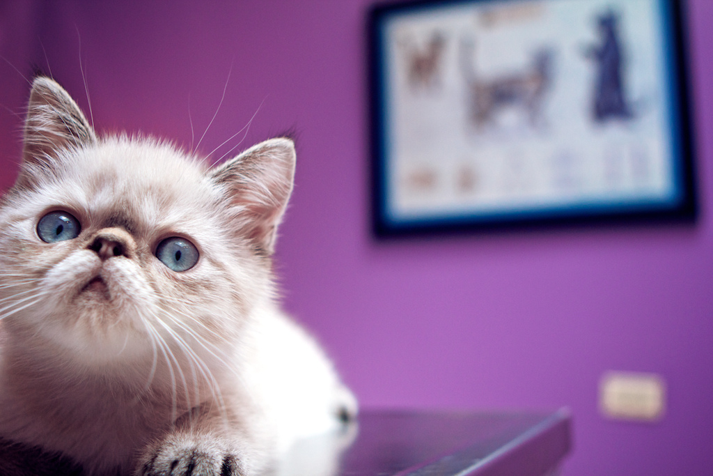 Is holistic veterinary care right for you? Read more to find out. | www.themeowplace.com/holistic-veterinary-care