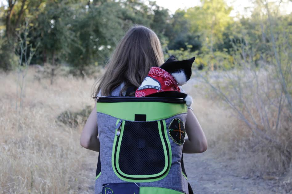 Dweezil has been adventuring outdoors since he was a tiny kitten. | www.themeowplace.com
