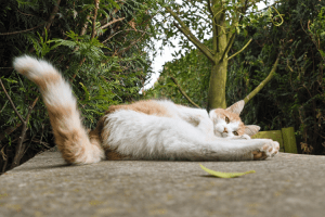 How much do you know about cat butts? How much do you want to know? We've got four fabulous facts for you, from the medically interesting ones to the truly bizarre. Tap the picture to find out more as we give you five facts about cat butts you probably don't want to know.
