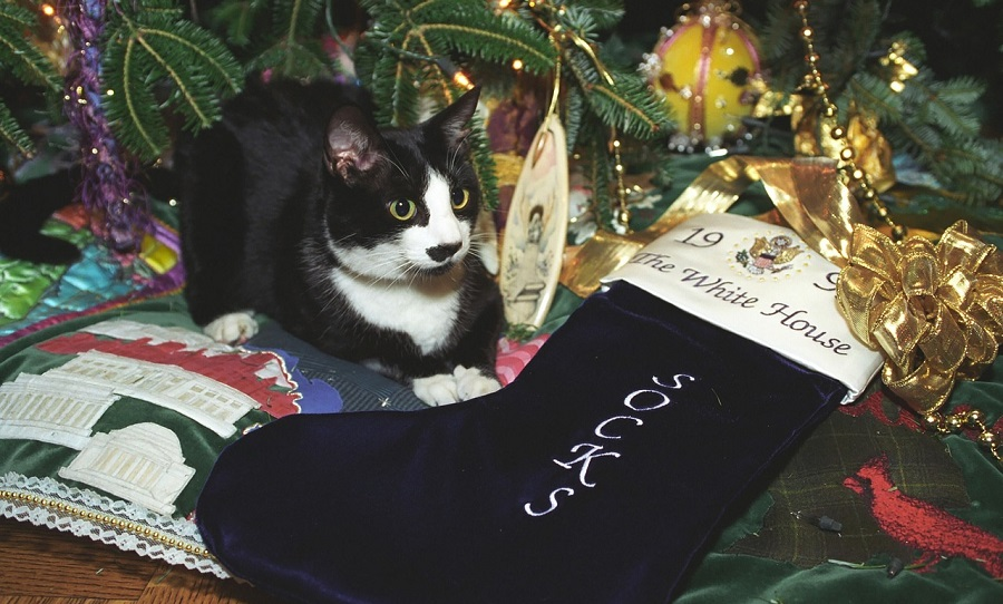 What's in your cat's Christmas stocking this year? We've found five perfect stocking stuffers for cats that they'll thank you for all year long.