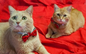 Sherlock and Watson found their perfect Baker Street home after being abandoned by their family of six years. Now they're living the spoiled life! Read their story by tapping the picture.