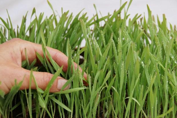 come coltivare un orto biologico