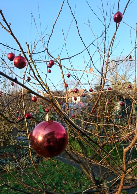 Christmas baubles on a fruit tree
