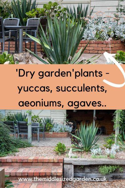 Dry garden plants