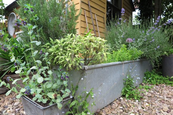 Agricultural feeding trough used as a raised bed.