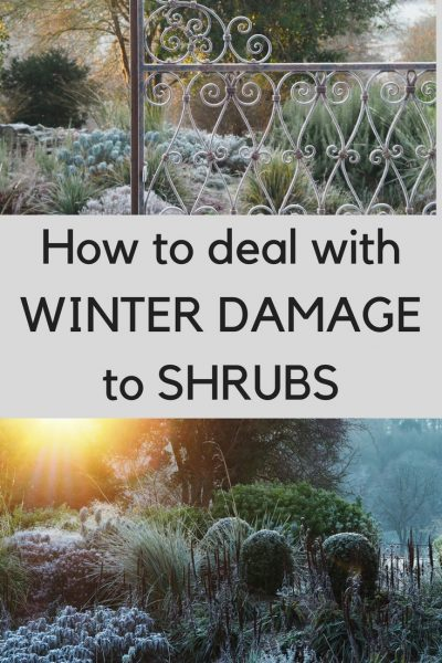 What to do when your shrubs and trees have winter damage