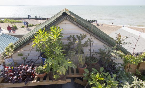 Roof garden pots by the sea