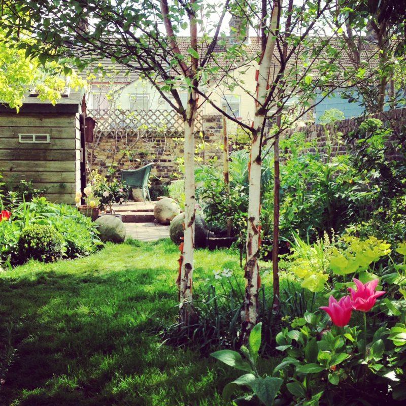Shed in a long, thin garden