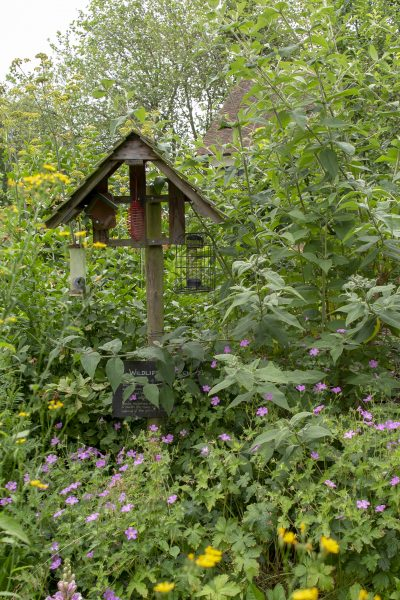 How to create a wildflower and wildlife patch in your small garden #backyard #wildlifegardening