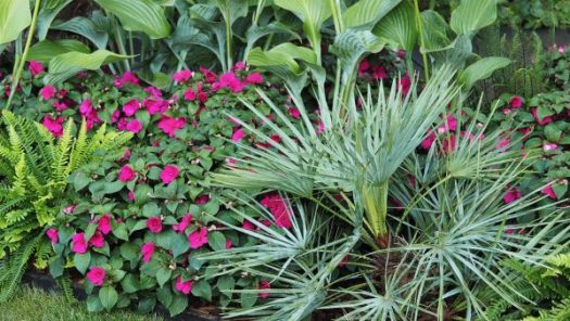 Imara Bizzy Lizzies - inexpensive bedding plants to team with exotics