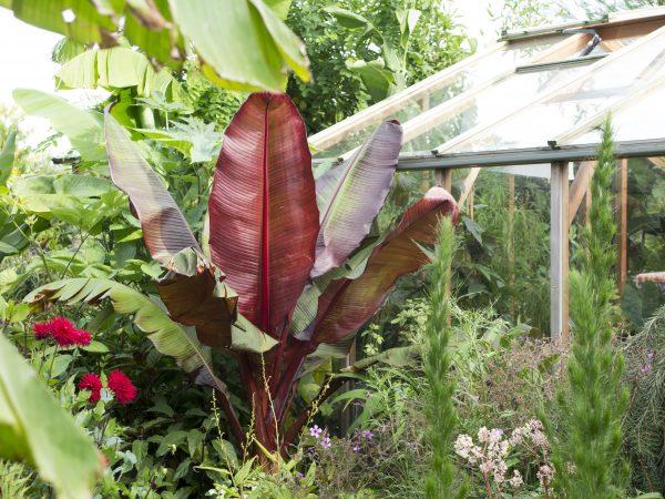 Tropical garden tips
