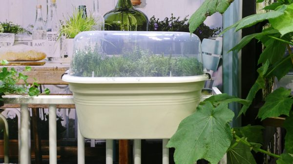 Elho balcony planter with cloche