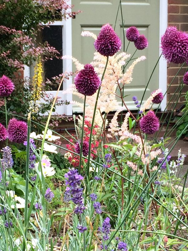 Alliums and persicaria