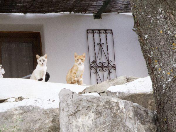 Stray kittens in Spain