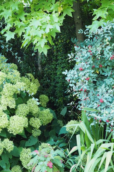 Plan your planting by starting with the foliage