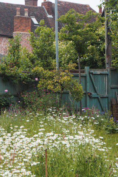 Meadow garden ideas for small gardens and backyards