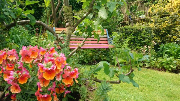 Red and orange flowers and garden bench