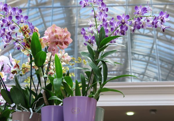 Orchids in pots - make sure you can lift the orchid out when watering so that it can drain properly