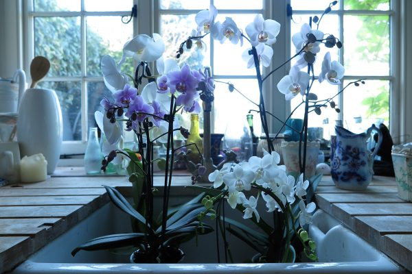 Stand your orchids in the sink after watering