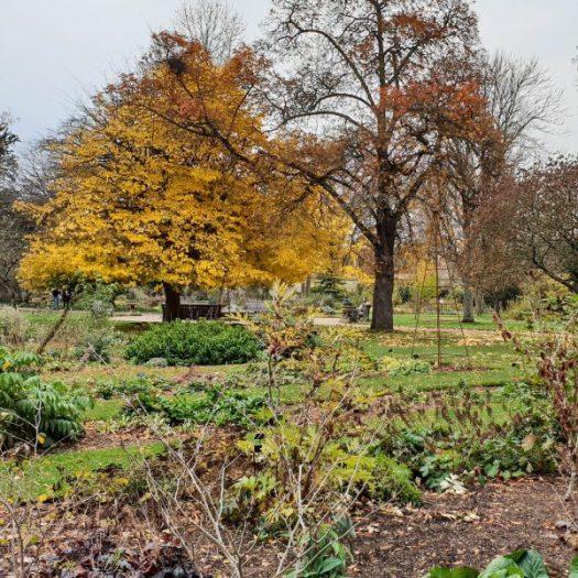 Oxford Botanic Gardens & Arboretum