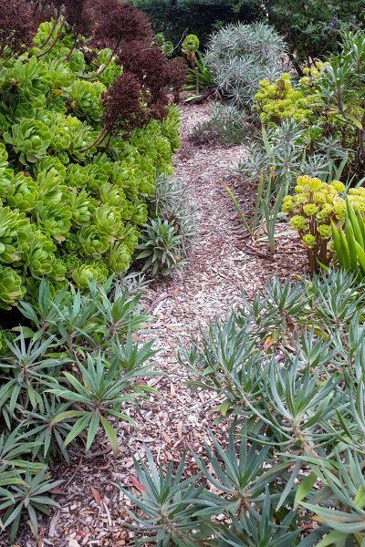 Path through the dry garden