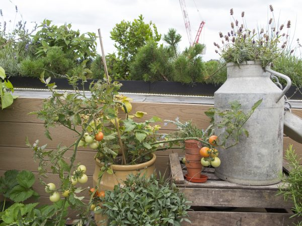 Grow tomatoes on a roof terrace.