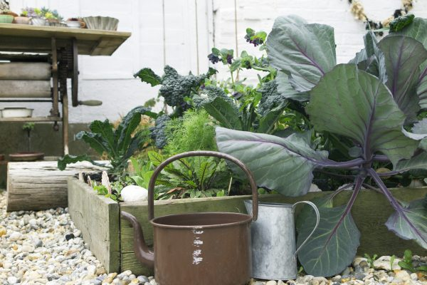 Use raised beds in a seaside garden
