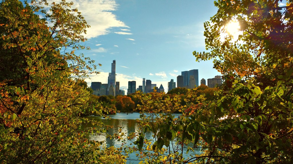 NYC skyline seen through trees in Central Park.
