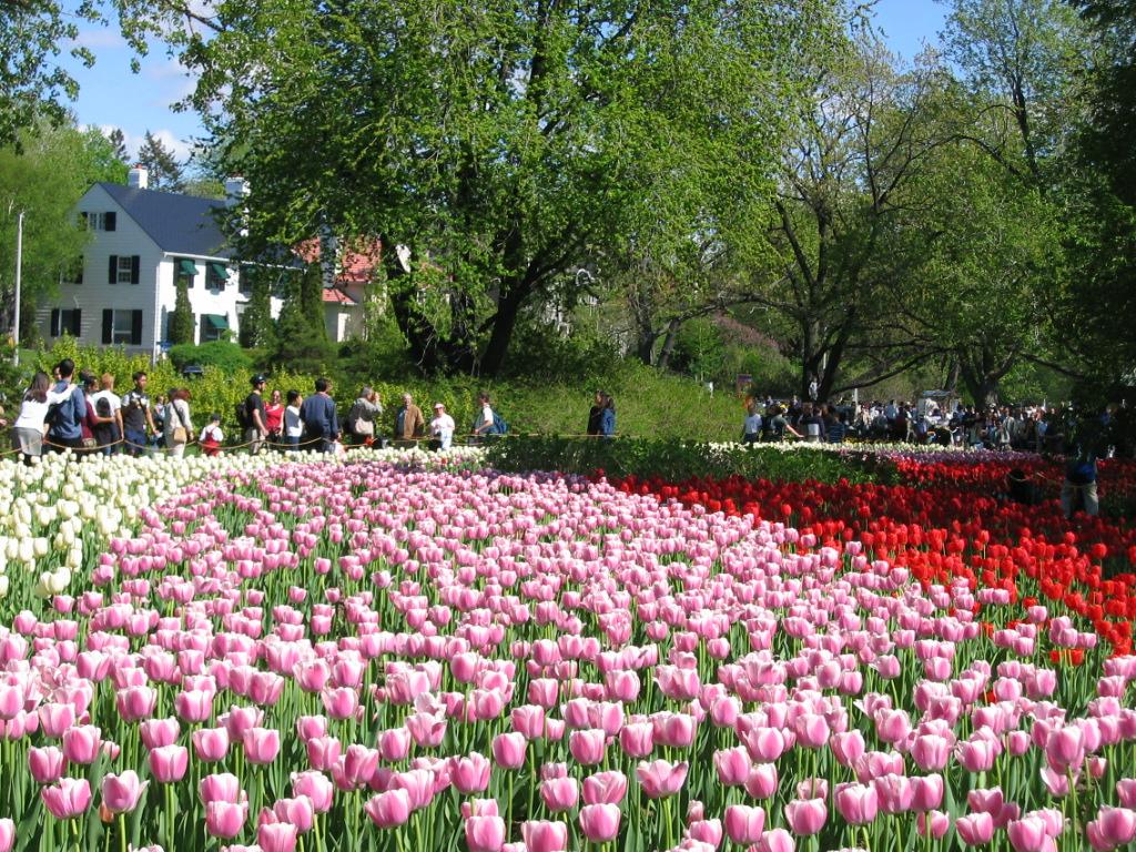 Canadian Tulip Festival in Ottawa, Canda, an annual spring event.