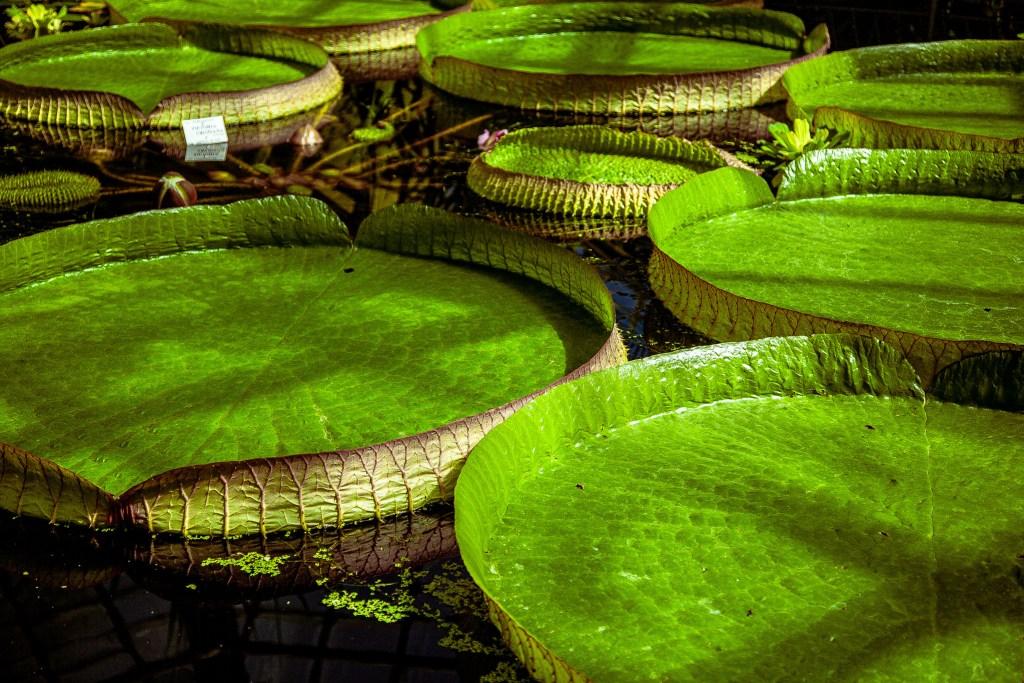 Interior of the Botanical Garden in Cluj-Napoca, Romania