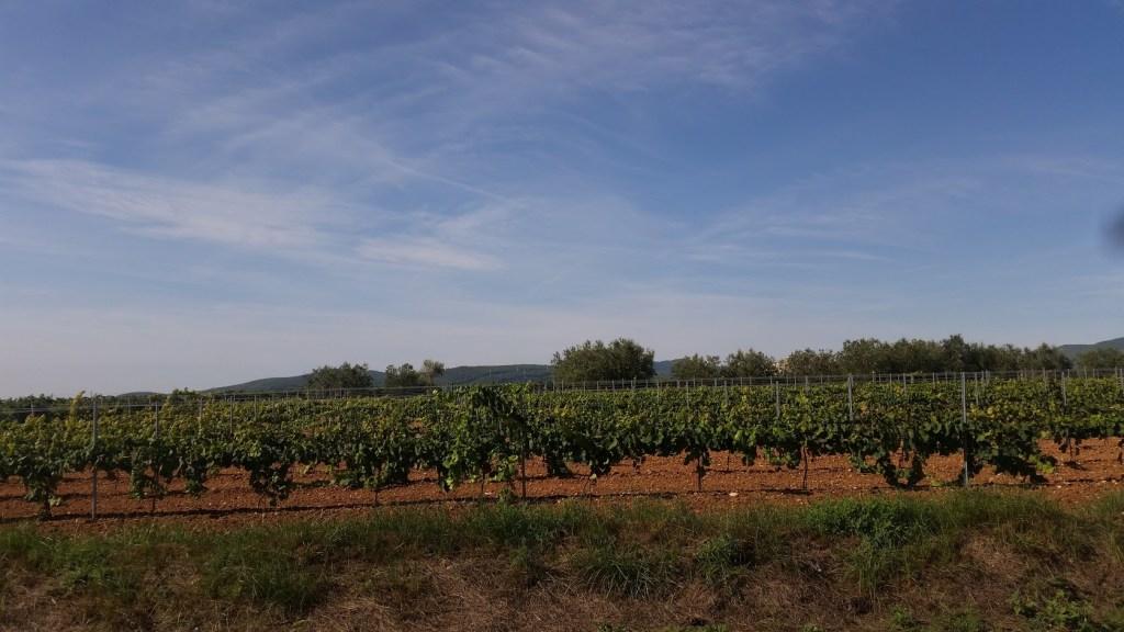 Vineyards in Spain