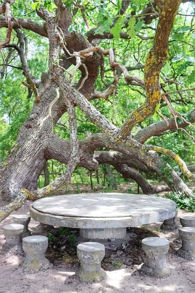 Ancient stone table and 600 year old tree in the Danube Delta forest