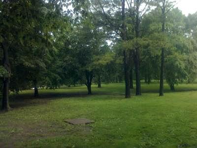 Trees in park - Memories of Flynn Park