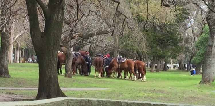 "Group of horses grazing on grass - ""The personal"" touch"" in a big Argentine city"